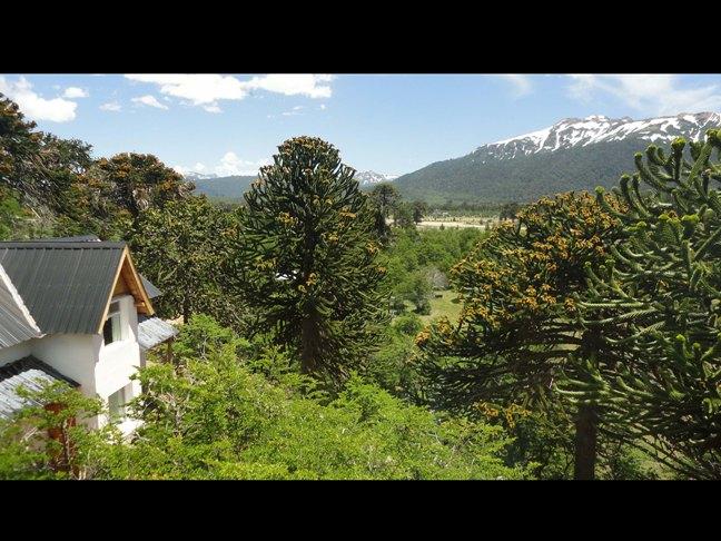 11 Cabañas Altos de Moquehue (Villa Pehuenia) - Cabañas.com