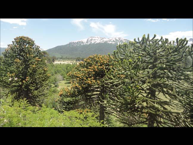 91 Cabañas Altos de Moquehue (Villa Pehuenia) - Cabañas.com