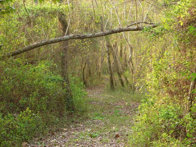 4290579 Reserva La Juana Ecolodge Tigre