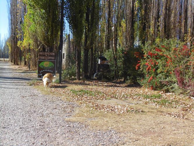 5977299722595638907559023767697113375309824o Los Abedules Bungalow (Malargue, Mendoza) - Cabañas.com