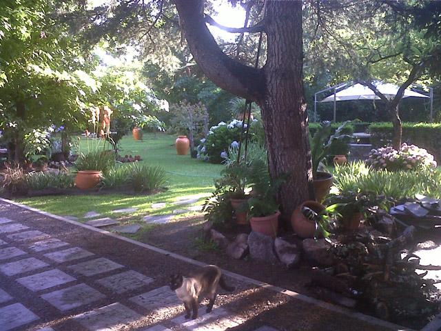 cabanas-rococo-sapo_1_599_3 Cabañas Rococo Sapo | Cabañas.com