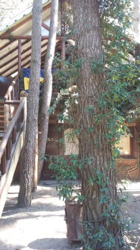 7ec295edb40f43e1be2bc2b63c093e27 Alquileres en Mar Azul | Cabañas.com